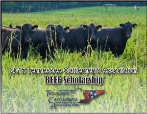 TCA Scholarship image 2015