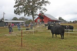 2015 Martin Farms Open House at the Farm IMG_0917