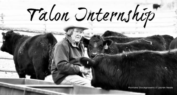 Talon Scholarship