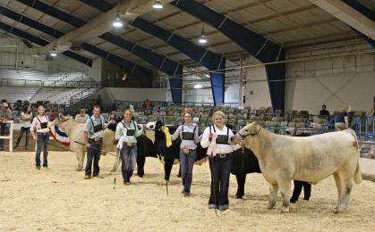 Top 5 Steers