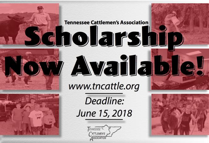 2018 TCA Scholarship